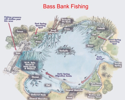 Bass Bank Fishing